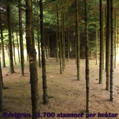 aedelgran-3700-stammer-pr-hektar2