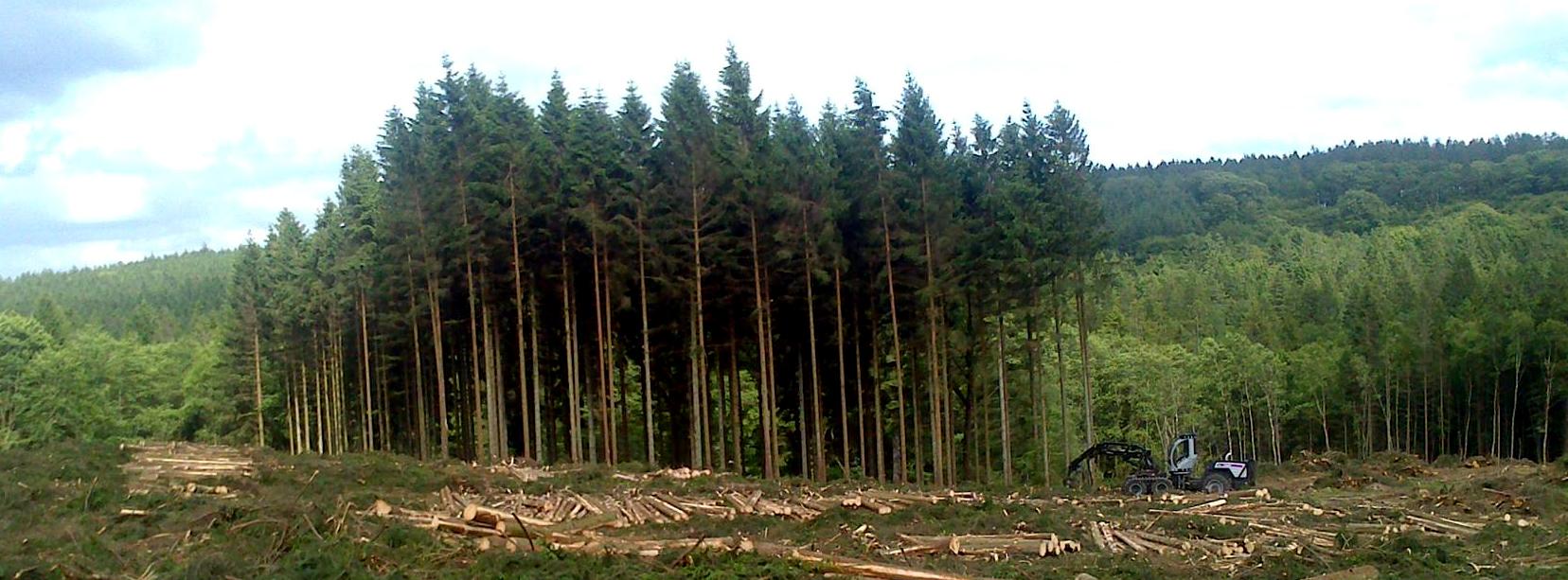 Super Skovning - professionel fældning af træer i skov RQ74