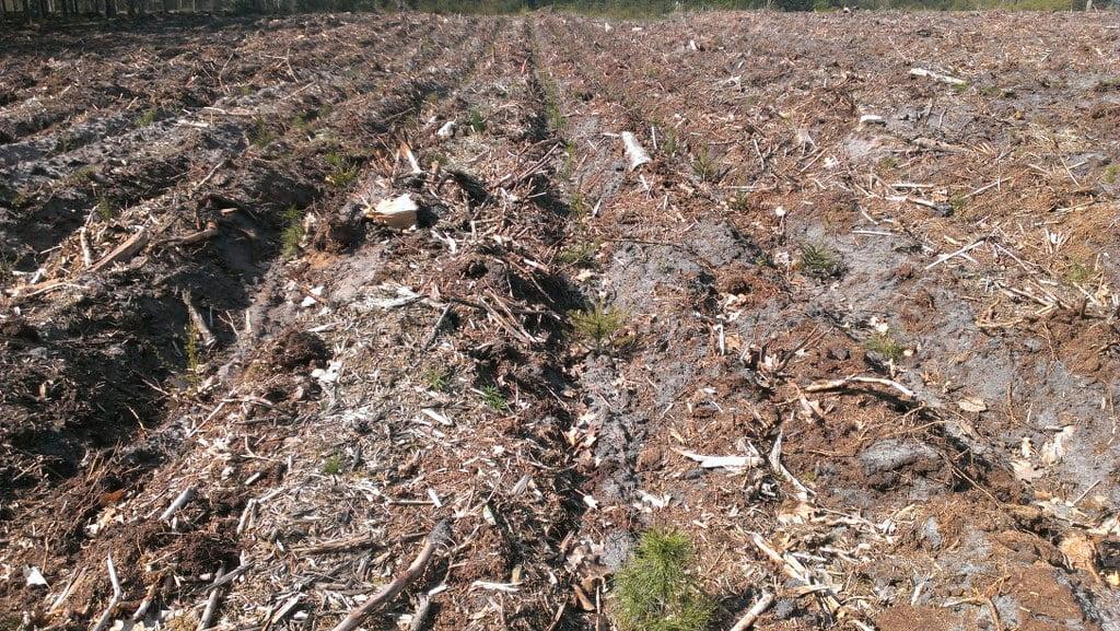 Areal der er tilplantet efter rillepløjning.
