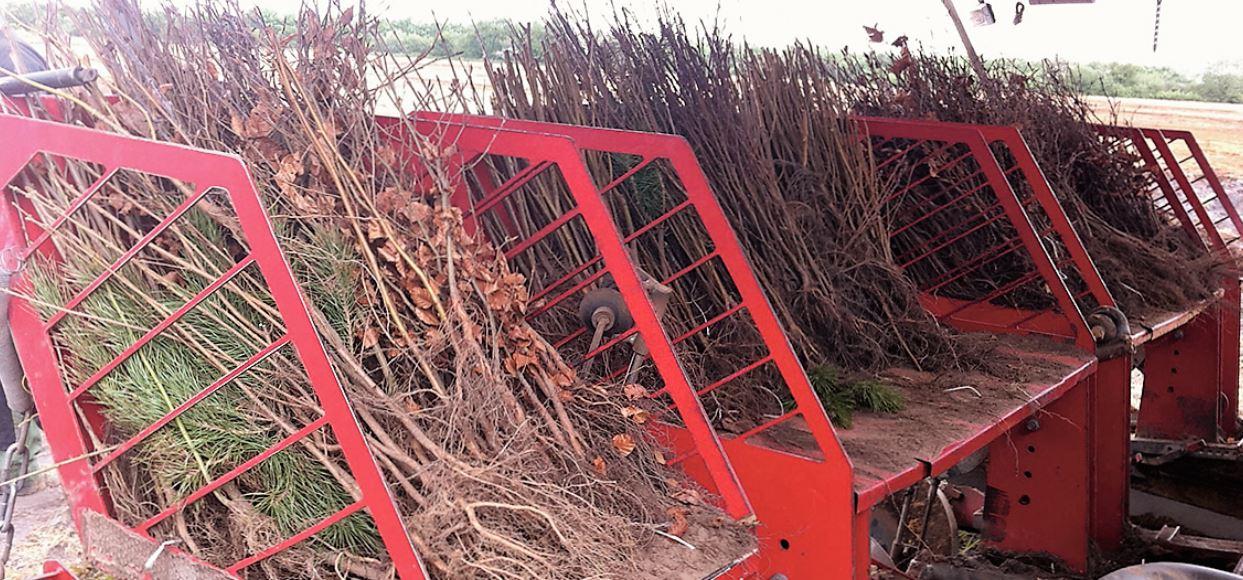 Skovplanter header