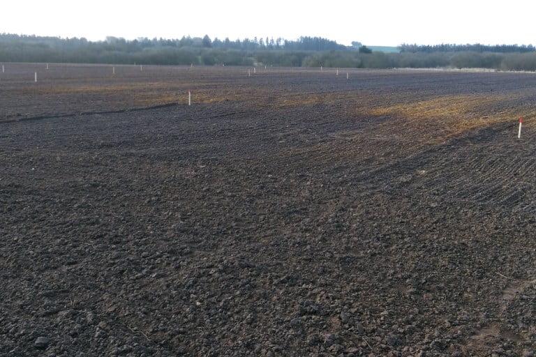 På fotoet ses et areal der er pløjet, pakket og sat af til plantning med pæle, der anviser de kommende bevoksninger og spor.