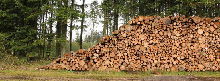 Opmåling af tømmer