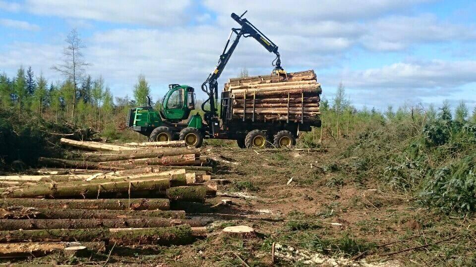 Skovfældning